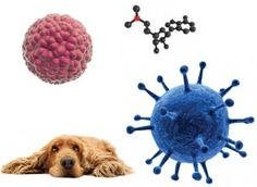 Should you treat your dog with stem cell therapy?   The Bark