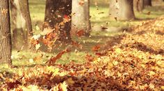 Falling Leaves Autumn Fall Wind Blowing | Autumn HD Wallpapers - HD Wallpapers