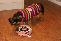 Ever wonder what our pooches get up to on their birthdays? well here is a little insight... Here is the birthday girl, dressed in her new birthday jumper, eating some cake!! That cake looks delicious!!! What a paw-fect day for such a paw-fect pooch!!