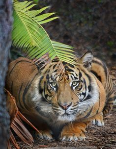 Crouching #tiger, hidden #dragon by Ion Moe