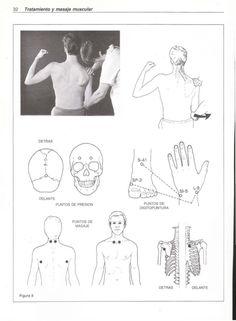 Músculos y optimización muscular           33  2.    Puntos de digitopuntura K-7 y L-8. El K-7 es    de la escápula hasta ...
