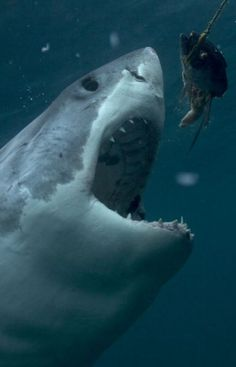 "SHARK WEEK is churning on tonight, replacing the usual Tuesday night crabbing of ""Deadliest Catch"" with a variety of great whites. ""Wrath of a Great White"