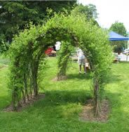 Living Willow Structures~I never knew you could take a willow branch, push it in the ground and it will take root. Amazing things you can build that are living!