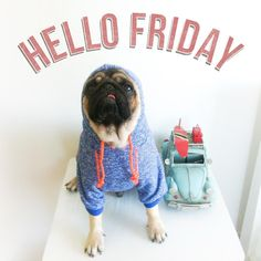 Oye, it's Friday! Have a wonderful day  pug pet puglife puglove  pugs dog mops friday