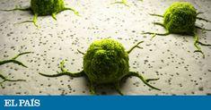Investigadores del Hospital del Mar de Barcelona han encontrado un haz de luz al final del túnel para el cáncer más potente: el que afecta al páncreas. Un hilo del que tirar para mejorar el pronóstico y la evolución de este tipo de tumores. 💪    http://qoo.ly/mjqzh 📞937 41 88 00  http://qoo.ly/nj9a3