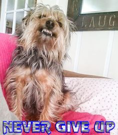Lost Dog - Yorkshire Terrier Yorkie - Galloway, OH, United States 43119