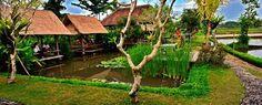 Tempat Outbound di Ubud yang dimiliki oleh Warung Janggar Ulam berlokasi di tepi sawah tepat bersebelahan dengan Warung Janggar Ulam. Keberadaan fasilitas outbound camp atau camping ground ini menjadikan Warung Janggar Ulam adalah salah satu pilihan tempat Outbound di Bali di wilayah sekitar Ubud.