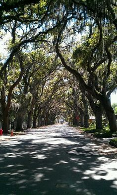 St Augustine Florida. My favorite street when I went there on my honeymoon