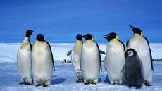 Die Antarktis hat entscheidenden Einfluss auf das Weltklima und die Meeresökosysteme. In mehr als 40 ganzjährig besetzten Forschungsstationen arbeiten …