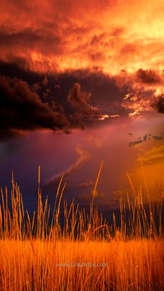 Photo on CANVAS Stormy Skies at Sunset Over Colorado FIELD of GOLD Wheat a Signed Original on stretched canvas ready to hang