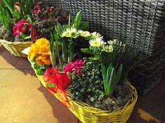 Rozkvetlé Velikonoce - hobby - Životní Styl