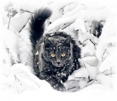A B C DIE KATZE LIEF IM SCHNEE   If it snows today, we are learning this song.