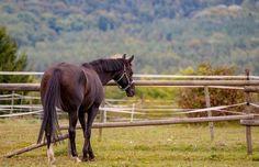 Pferd by KoreaSaii - 800 Horses Photo Contest