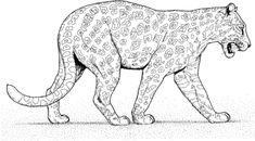 Comment Dessiner Une Panthere Dessins Coloring Pages Adult