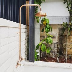 "Brooklyn Copper Co. on Instagram: ""These two make the perfect pair... Our Coogee Shower with the 250mm Daintree Shower Rose."""