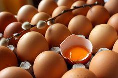 ¿Cómo nos alimenta el huevo