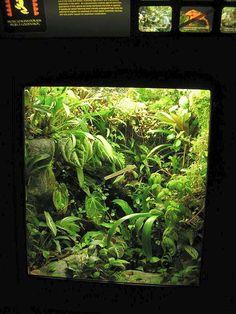 tree frog terrarium setup   ... and Reptile Information Resource >> Henry Vilas Zoo Frog Exhibit