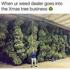 Follow me if you smoke weed.Buy Marijuana/ Buy weed /Buy cannabis and marijuana products.You have been thinking of  where to get the oldest and the best marijuana strains as well as concentrates and edibles, and place your order to get in shipped within 48 hours max.No Card needed.Every transaction  with us is discreet .More info at.. www.onlinecannabissupply.com Text or call +1(951) 534 5163