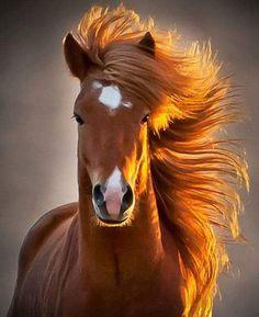 Brown Horse – Diamond Painting Kit – My Diamond Paintings Braunes Pferd – Diamantmalerei-Kit – Meine Diamantbilder Cute Horses, Pretty Horses, Horse Love, Beautiful Horses, Animals Beautiful, Beautiful Beautiful, Beautiful Redhead, Beautiful Pictures, Cute Horse Quotes