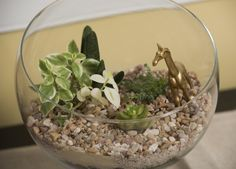 Create a living little world in your home with these step-by-step instructions.