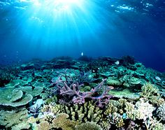 Top 3 Reasons to Visit The Great Barrier Reef, Belize