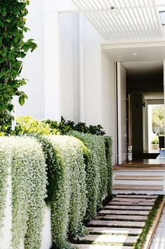 Gorgeous side garden and entryway / Hermoso jardín lateral Landscape Architecture, Landscape Design, House Architecture, Landscape Rocks, Outdoor Walkway, Paver Walkway, Side Walkway, Paver Sand, Paver Edging