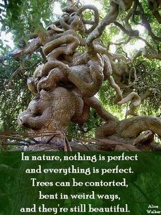 Trees are beautiful. www.dogwoodalliance.org