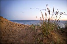 Dunes @ Wellfleet, MA Cape Cod
