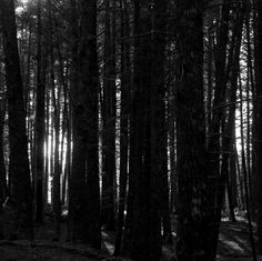 Dark Forest by avardwoolaver