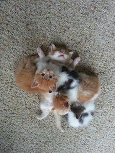 What A Sleepy Kitty Cats,cuteness,Cuteness Overload,Funny Animals, Animal Gato, Amor Animal, Cute Funny Animals, Cute Cats, Funny Cats, Kittens Cutest, Cats And Kittens, Animals And Pets, Baby Animals