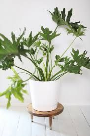 mid century plants - Google Search