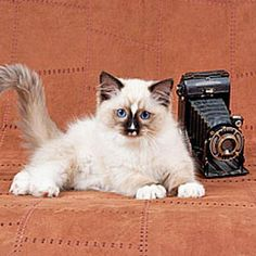 The Basics of Cat Photography | Catster