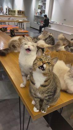 Cute Little Kittens, Cute Baby Cats, Funny Cute Cats, Cute Little Animals, Cute Funny Animals, Kittens Cutest, Cute Dogs, Cute Animal Videos, Funny Cat Videos
