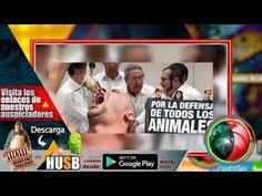 "Animalistas piden no usar más expresión ""tragar sapos"" en proceso de paz"