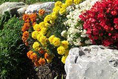 Blumen Vegetables, Flowers, Garten, Vegetable Recipes, Royal Icing Flowers, Flower, Florals, Bloemen, Blossoms