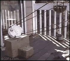 squirrel launch