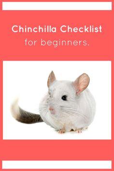 Are you a new chinchilla owner? We made the ultimate checklist for YOU.