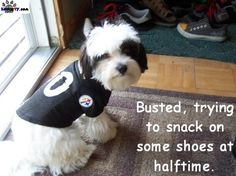 Pittsburgh Steelers dog (spawty)