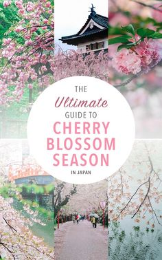 These beautiful places in Japan are perfect for cherry blossom season. Make sure you don't miss out by going at the wrong time! Here's are tips for planning a Spring trip to Japan.