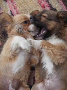 amor animais 12 Diariamente Awww: Os animais têm o amor, demasiado (30 fotos)