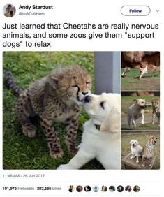 Things that make you go AWW! Like puppies, bunnies, babies, and so on. A place for really cute pictures and videos! Funny Animal Memes, Cute Funny Animals, Cute Baby Animals, Funny Cute, Animals And Pets, Funny Memes, Funny Humour, Funny Pics, Funny Best Friend Memes
