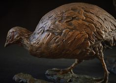 Swainson's Spurfowl (Francolin) - Female  150 x 200 x 150mm, 3kg. 2017