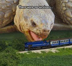 Giant Turtle Attack