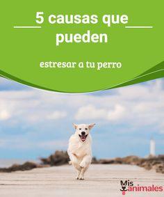 5 causas que pueden estresar a tu perro  Hay situaciones del día a día que quizá podemos dar por sentadas o incluso por inexistentes, que pueden estresar a tu perro. Es posible que tu perro necesite cosas que ni siquiera tú hayas pensado que debas darle y, que por tanto no les estés prestando atención, y esto pueda estresar a tu perro. #estrés #causas #perro #conejos