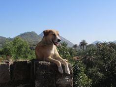 alpha alpha Alpha Alpha, Mount Abu, Labrador Retriever, Awesome, Dogs, Animals, Labrador Retrievers, Animales, Animaux