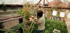 Minik Bir Fincan Bahçesi Nasıl Yapılır?   Çevreci Bahçem