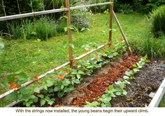 Raised bed trellis