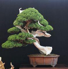 One Bonsai, Four Shots Bonsai Tree Care, Bonsai Tree Types, Flowering Succulents, Potted Plants, Bonsai Tools, Juniper Bonsai, Tree Base, Miniature Trees, Bonsai Garden