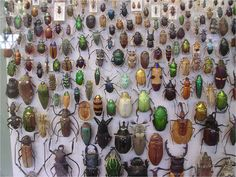 dung-beetles-direct-1.jpg (1502×1127)