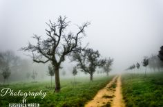 Journey Through the Mists by Martin Flashback / 500px
